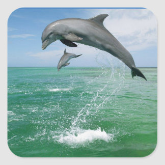 Dolphin in the wild jumping and playing square sticker