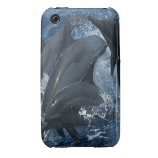 Dolphin iPhone 3 case