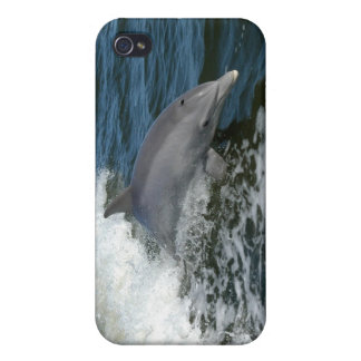 Dolphin iPhone 4 Cases