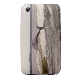 Dolphin IPod Case/Cover iPhone 3 Cover
