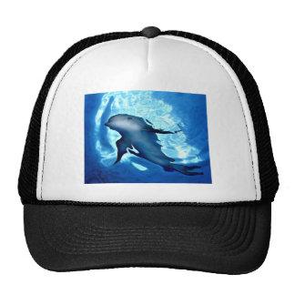 Dolphin.jpg místico gorra