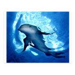 Dolphin.jpg místico tarjetas postales