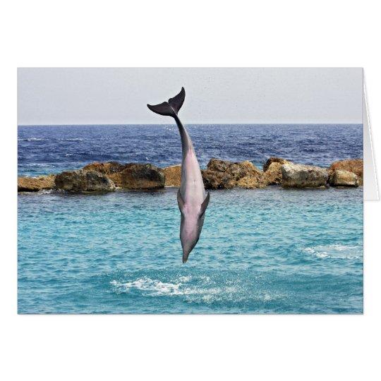 dolphin jump card