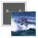 Dolphin jumping, Grand Bahama, Bahamas 2 Inch Square Button