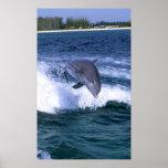 Dolphin jumping, Grand Bahama, Bahamas Poster