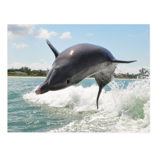Dolphin Jumping Out of the Water Postcard