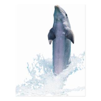 Dolphin Jumping Postcard