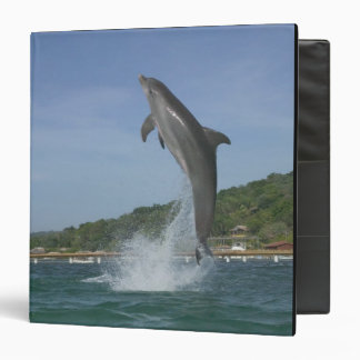Dolphin jumping, Roatan, Bay Islands, Honduras Binder