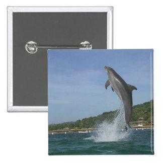 Dolphin jumping, Roatan, Bay Islands, Honduras Buttons