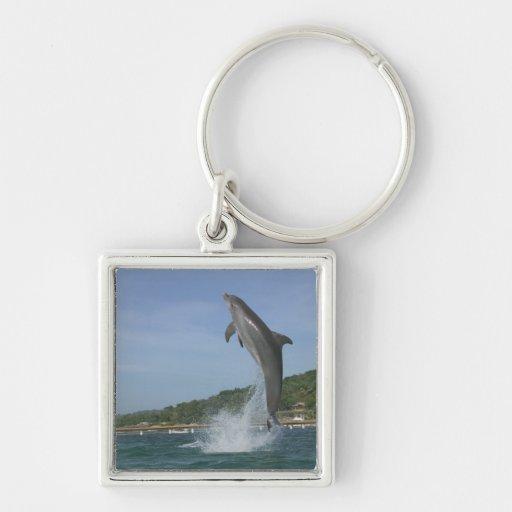Dolphin jumping, Roatan, Bay Islands, Honduras Keychains