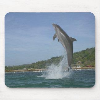 Dolphin jumping, Roatan, Bay Islands, Honduras Mouse Pad