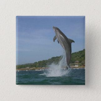 Dolphin jumping, Roatan, Bay Islands, Honduras Pinback Button