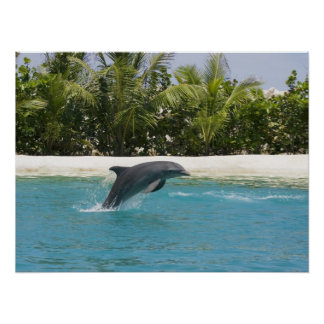 Dolphin Jumping Tropical Beach Poster