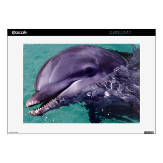 Dolphin Laptop skin