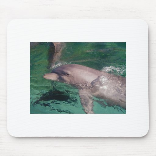 Dolphin lazing in sun mouse pad