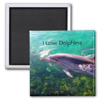 Dolphin Magnet Magnets