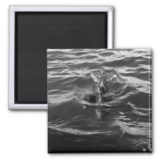 Dolphin Mother and Baby 2 Inch Square Magnet