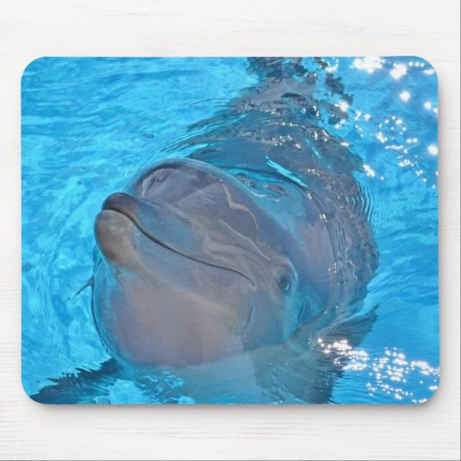 Dolphin Mouse Pads
