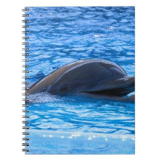 Dolphin Journals