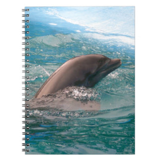 Dolphin Note Books
