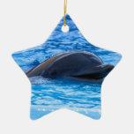 Dolphin Ornaments