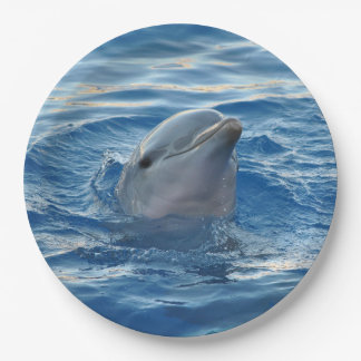 Dolphin Paper Plate