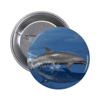 Dolphin Photo Pinback Button