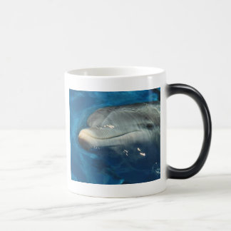 DOLPHIN PHOTO MAGIC MUG