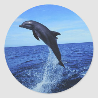 Dolphin Photo Stickers