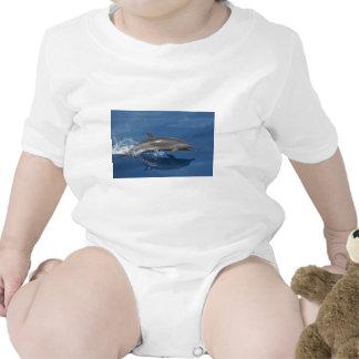 Dolphin Photo Shirt
