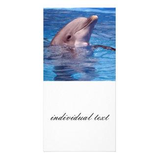 dolphin photo card