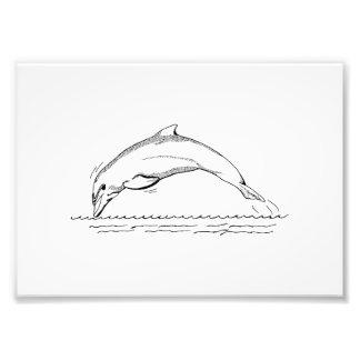 Dolphin Art Photo