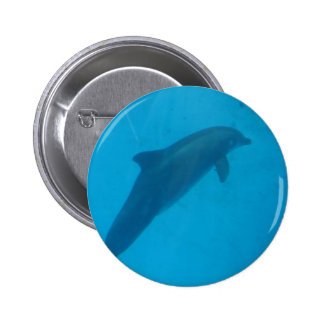 dolphin pinback button