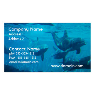 Dolphin Play Business Cards
