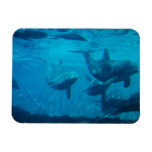 Dolphin Play Flexible Magnet Magnet
