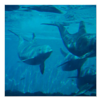 Dolphin Play Poster