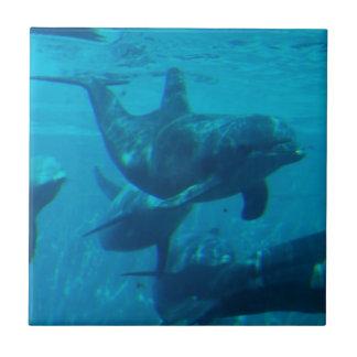 Dolphin Play Tile