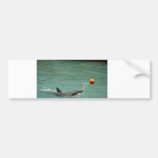 Dolphin playing ball bumper sticker