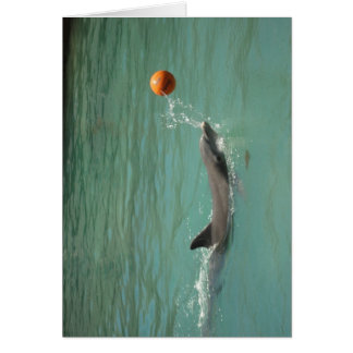 Dolphin playing ball card