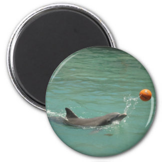 Dolphin playing ball magnet