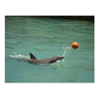 Dolphin playing ball postcard