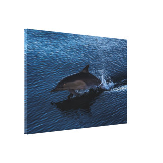 Dolphin Playing off Surfers Paradise Canvas Print