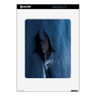 Dolphin Playing off Surfers Paradise iPad Decal