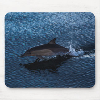 Dolphin Playing off Surfers Paradise Mouse Pad