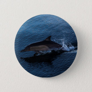 Dolphin Playing off Surfers Paradise Pinback Button