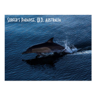 Dolphin Playing off Surfers Paradise Postcard