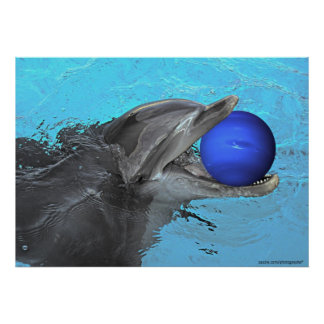 Dolphin plays with Neptune  Poster