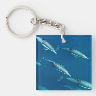 Dolphin Pod Swimming Keychain