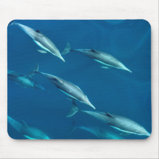 Dolphin Pod Swimming Mouse Pad