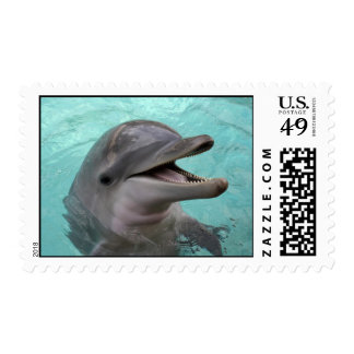 Dolphin Postage Stamp